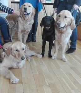Student Blogs - Guide Dogs Visit